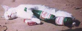 gato-beodo.jpg
